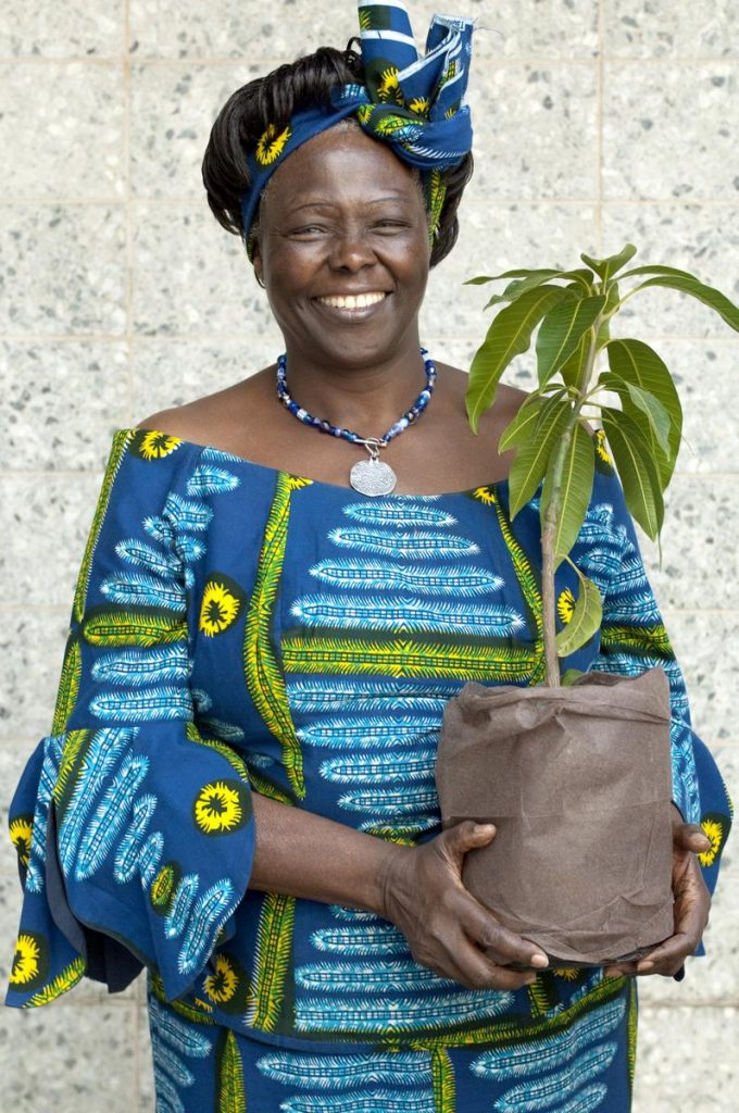 an introduction to the tactics by howard zinn and wangari maatha